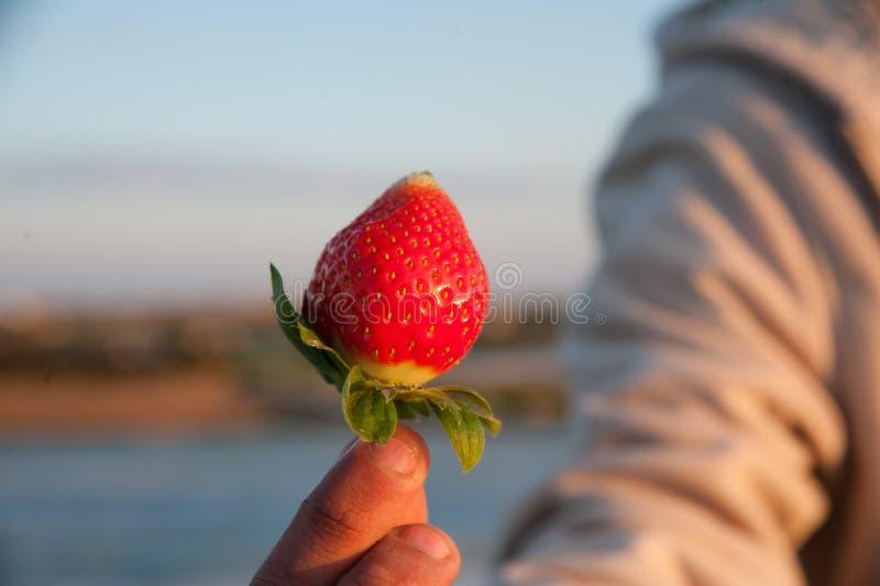 nytt valda jordgubbar royaltyfri bild