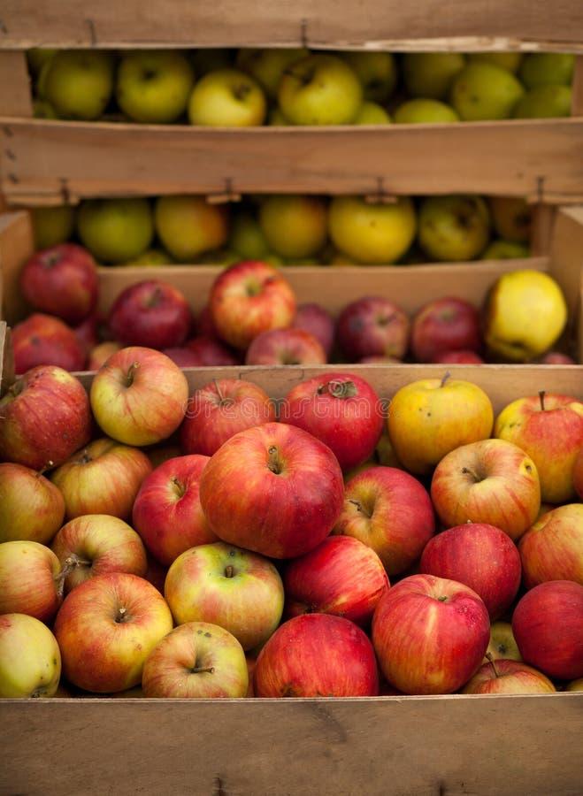 Nytt valda röda äpplen i en träspjällåda arkivfoton