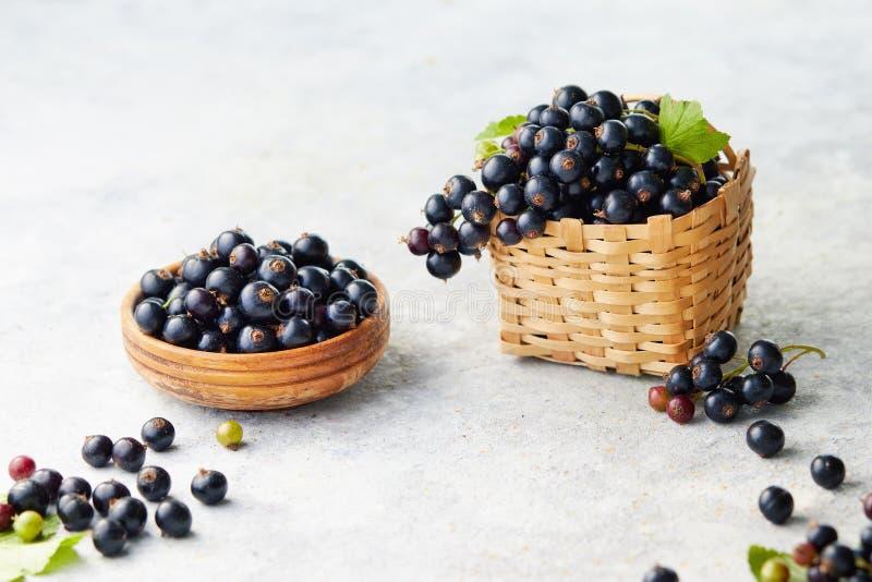 Nytt valda svart vinbär royaltyfri bild
