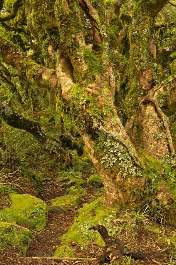 NZ-Sommer 2011 - Kamahi-Wald lizenzfreie stockbilder