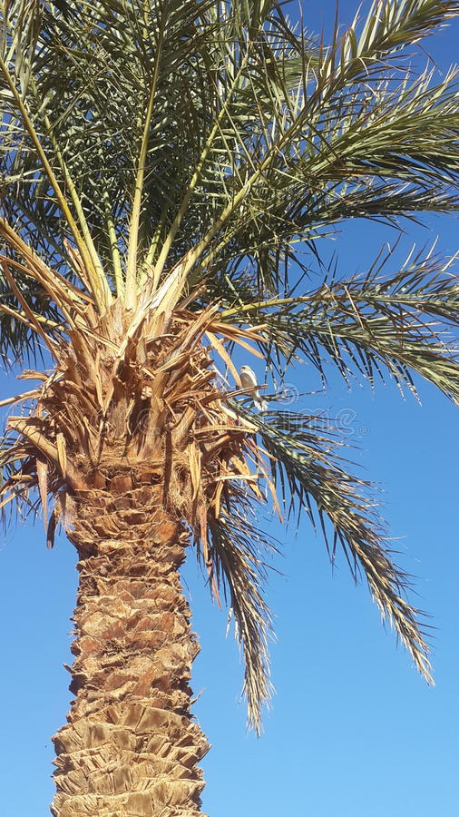 Oásis da palma em Argélia imagem de stock royalty free