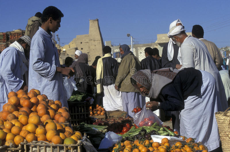 OÁSIS DE ÁFRICA EGIPTO SAHARA SIWA fotos de stock royalty free