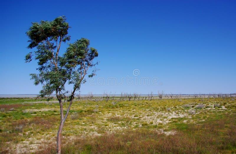 Oásis do deserto australiano fotos de stock