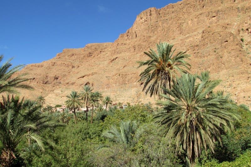 Oásis grandes da palma das montanhas do deserto imagens de stock royalty free