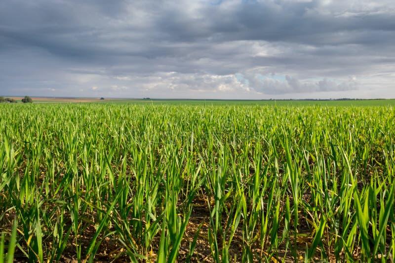 oändlighetsgräsplanfälten på den regniga molniga dagen arkivbild