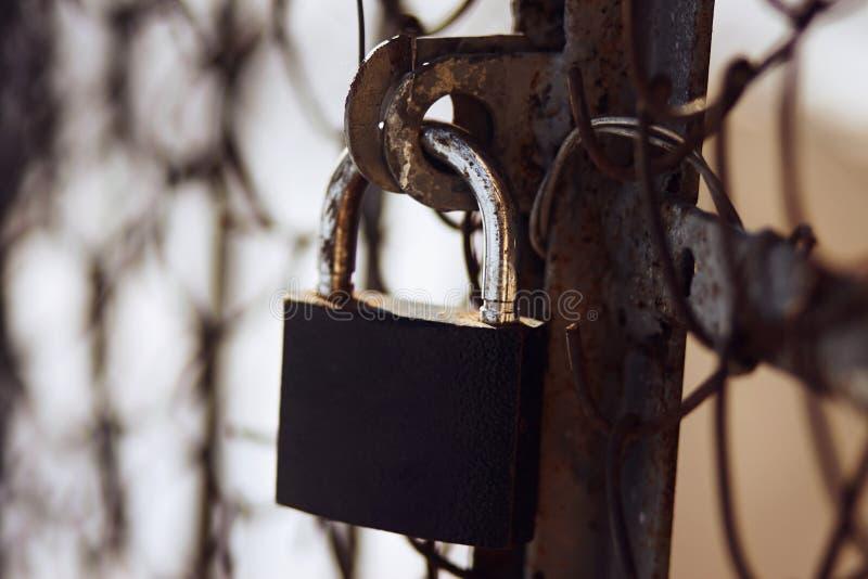 Ośniedziały podławy kędziorek zamyka ośniedziałą starą bramę fotografia royalty free