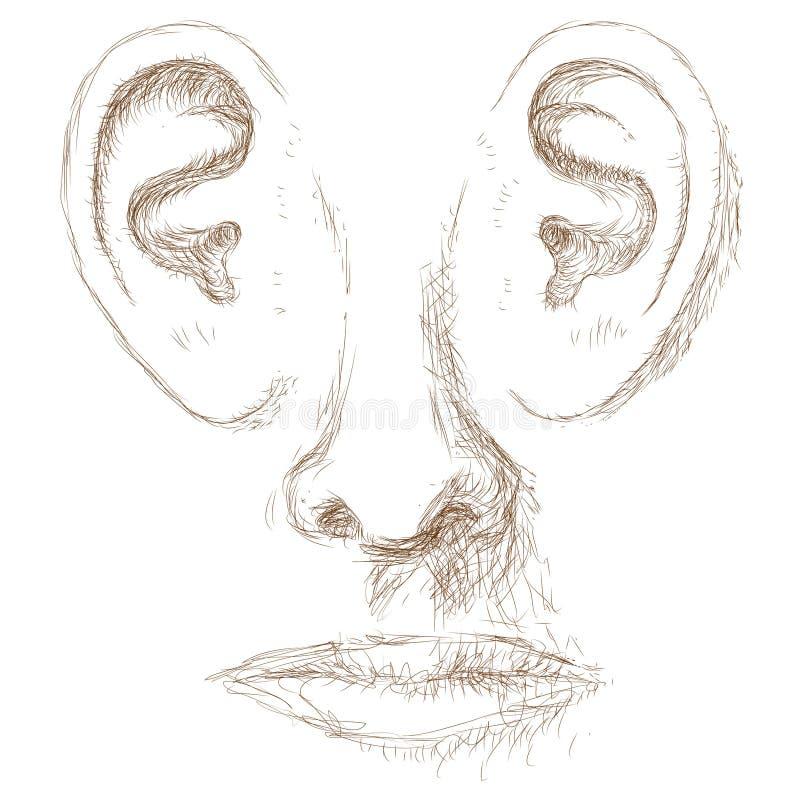 Oído ilustración del vector