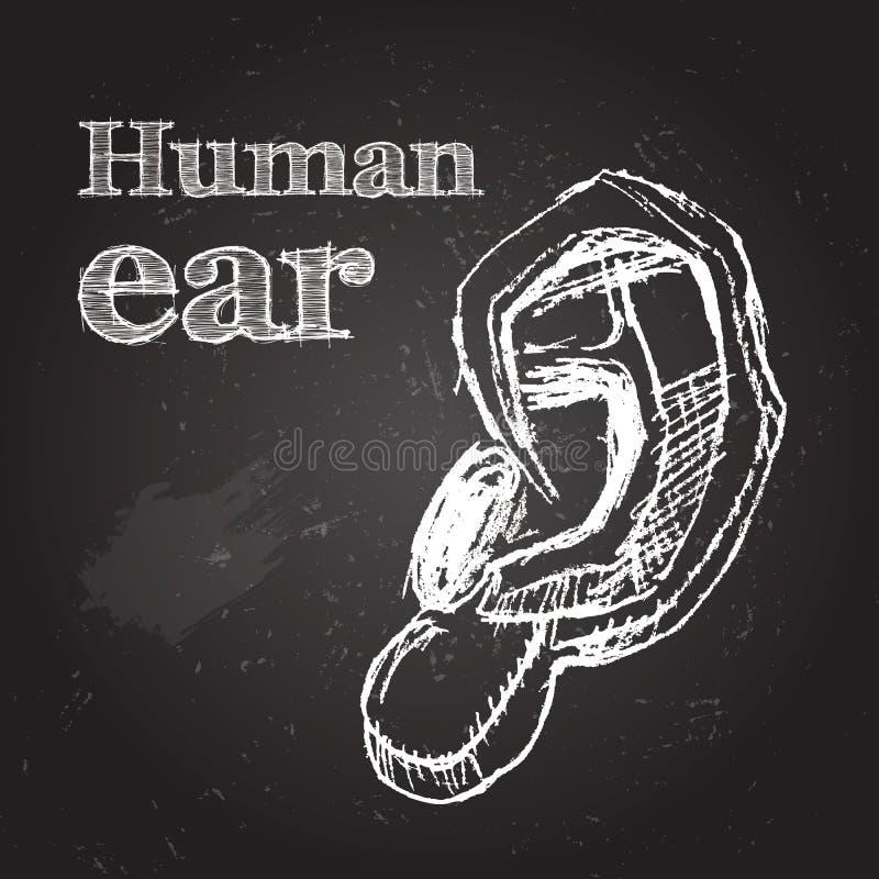oído libre illustration