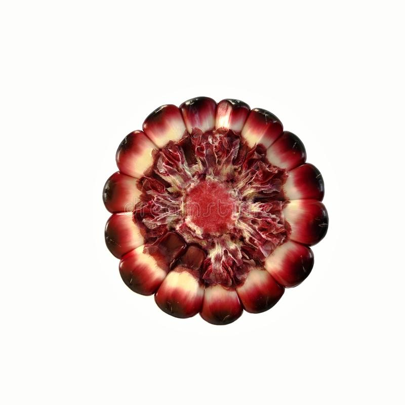 Oído de maíz púrpura que colores de la demostración de la mazorca y del corazón imagen de archivo
