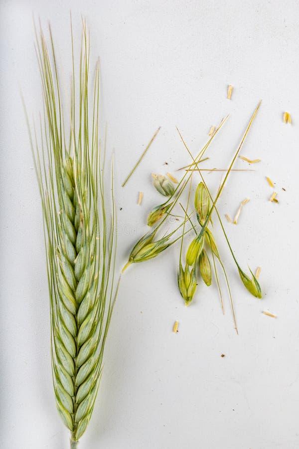 Oído del grano en una tabla blanca Semillas y oídos no maduros del grano antes de la cosecha imagenes de archivo