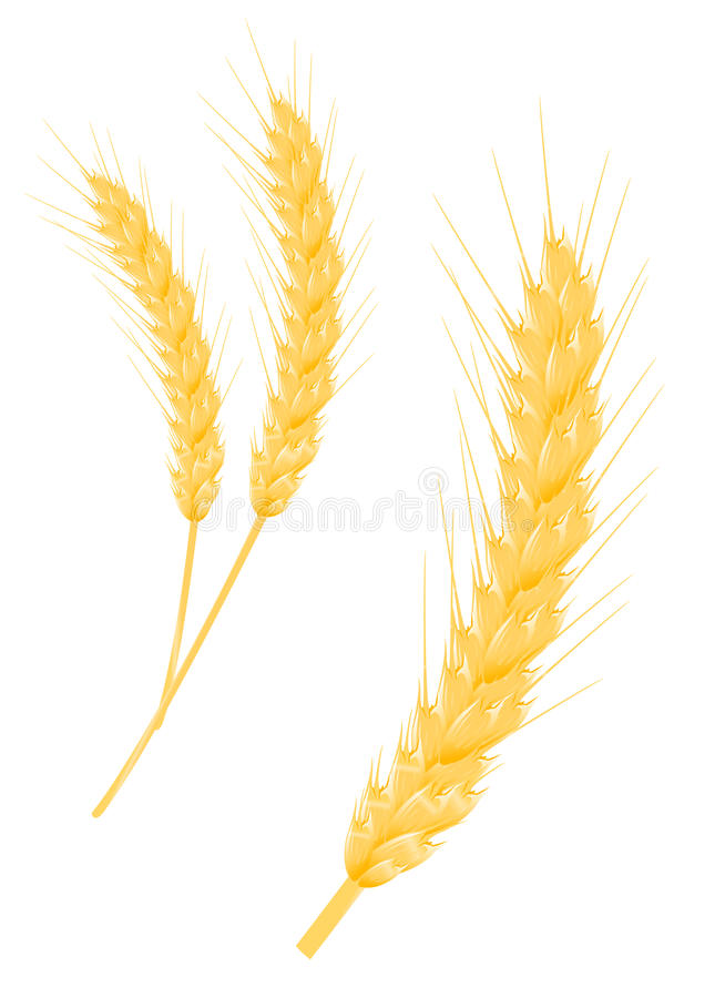 Oído del trigo stock de ilustración