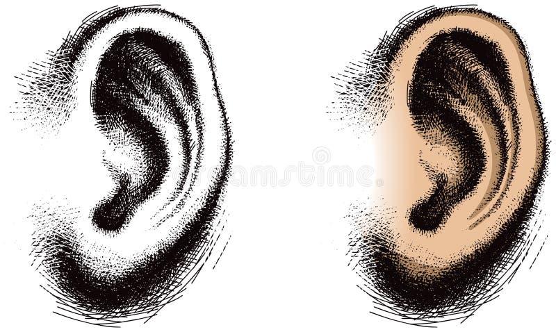 Oído humano ilustrado ilustración del vector