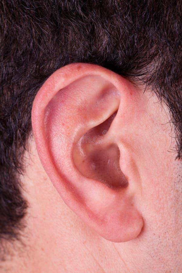 Oído masculino fotos de archivo