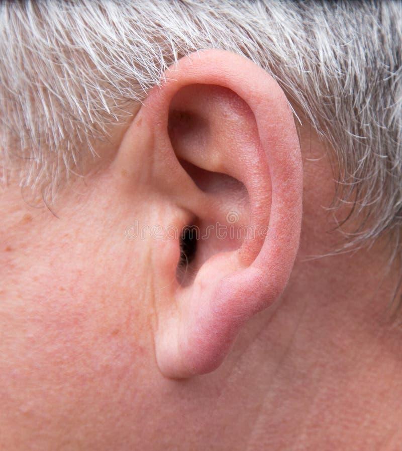 Oído masculino Macro imágenes de archivo libres de regalías