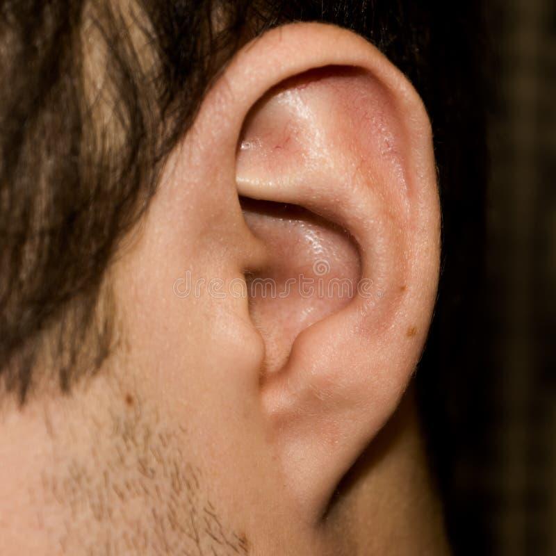 Oído masculino Primer adherente del lóbulo fotos de archivo