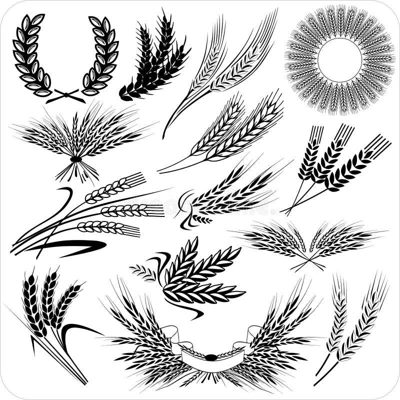Oídos creativos del trigo ilustración del vector