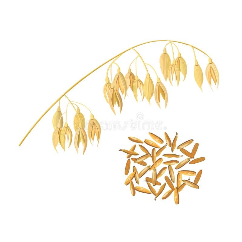 Oídos de la avena del grano y del salvado Punto y maíz de oro ilustración del vector