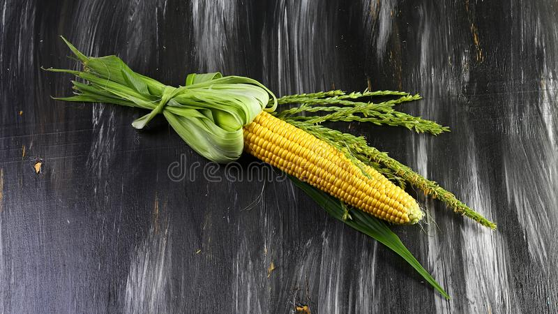 Oídos de maíz crudos dulces con las hojas aisladas en un fondo oscuro Visión superior con el espacio para su texto imágenes de archivo libres de regalías