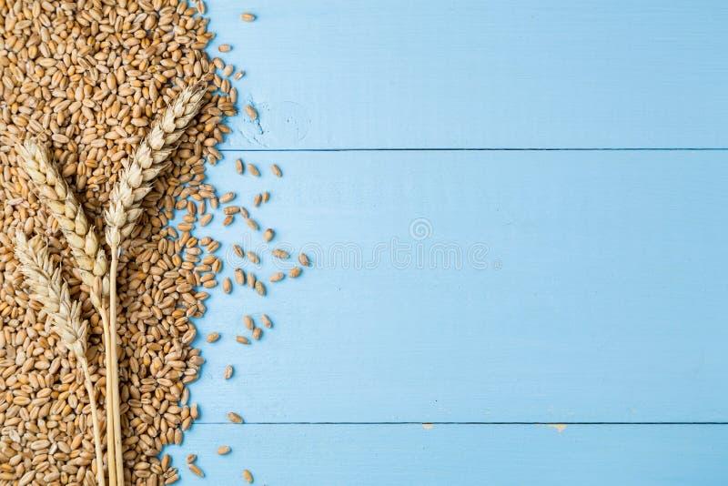 Oídos de oro maduros del trigo en fondo de madera azul foto de archivo libre de regalías