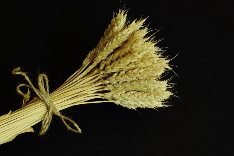 Oídos de oro maduros vertidos del trigo atados con guita del yute en fondo negro Concepto simbólico - trabajo rural, riqueza, cos imágenes de archivo libres de regalías