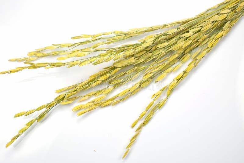 Oídos del arroz fotos de archivo