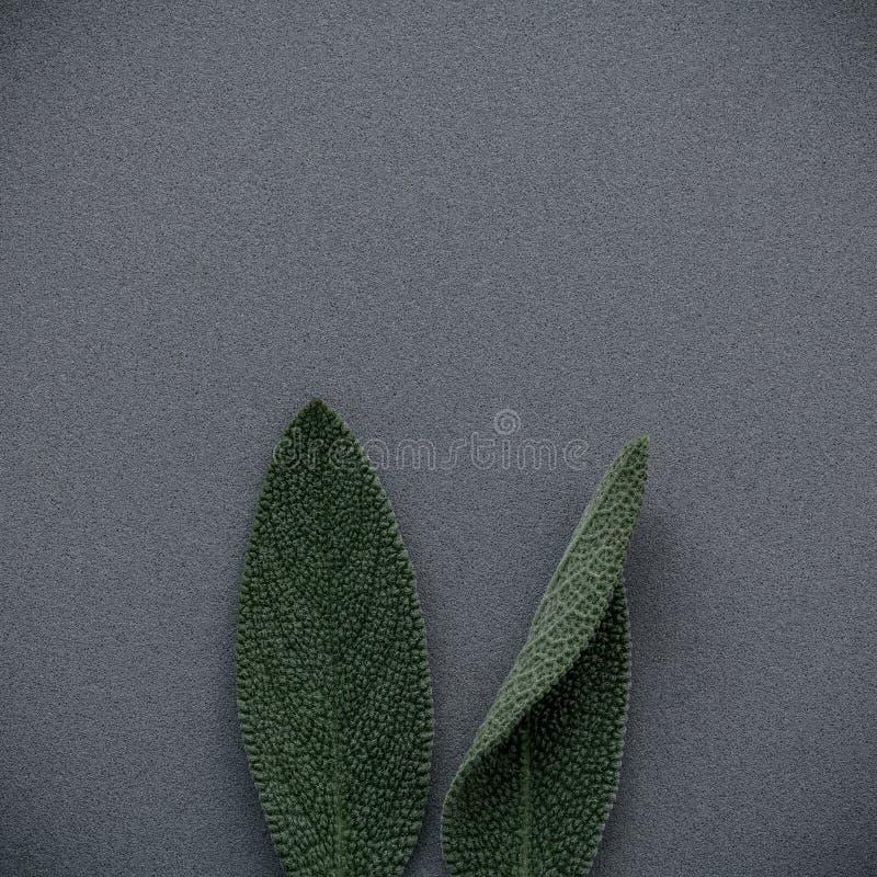 Oídos del conejito de pascua hechos de las hojas sabias Concepto mínimo de pascua fotos de archivo libres de regalías