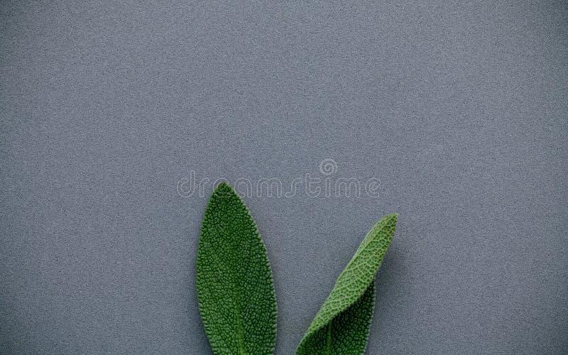 Oídos del conejito de pascua hechos de las hojas sabias Concepto mínimo de pascua imagen de archivo
