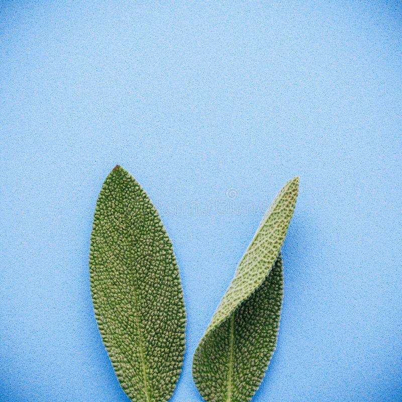 Oídos del conejito de pascua hechos de las hojas sabias DIY y pascua mínima foto de archivo libre de regalías