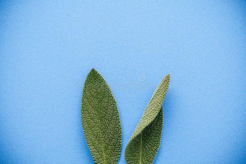 Oídos del conejito de pascua hechos de las hojas sabias DIY y pascua mínima imagen de archivo libre de regalías