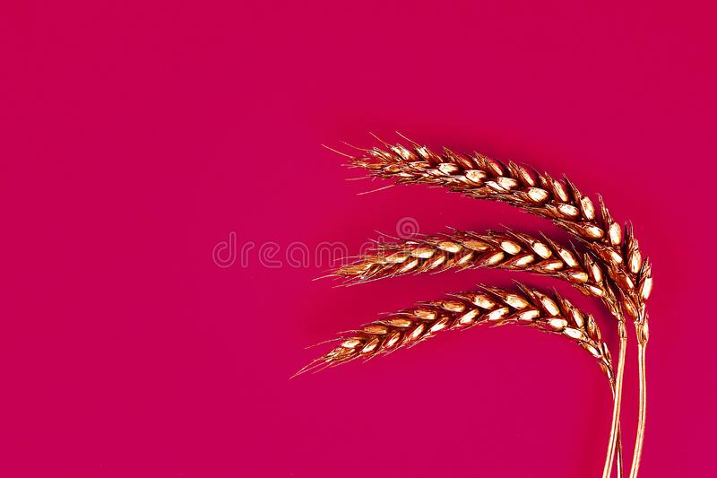 Oídos del trigo pintados con la pintura del oro en un fondo rojo Espacio superior de la copia de la torsión Trigo de oro imagen de archivo