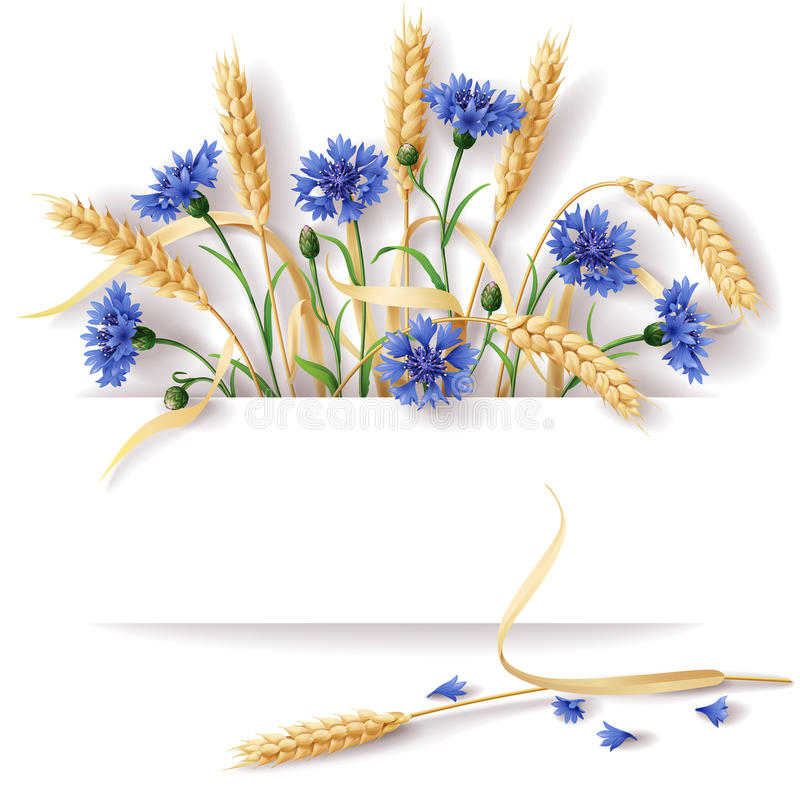 Oídos y acianos del trigo stock de ilustración