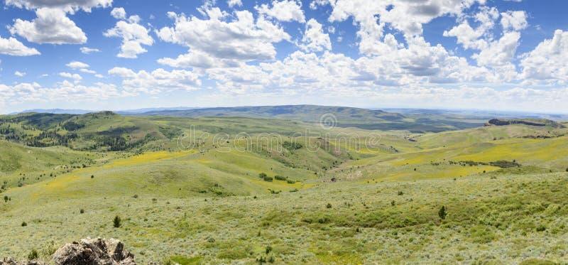 Oídos y Lupine de las mulas que colorean las laderas de Idaho al sudoeste y de Oregon del sudeste fotos de archivo libres de regalías