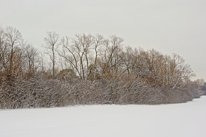Обнаженные деревья и кустарники в снеге в национальном парке Gatineau стоковое фото
