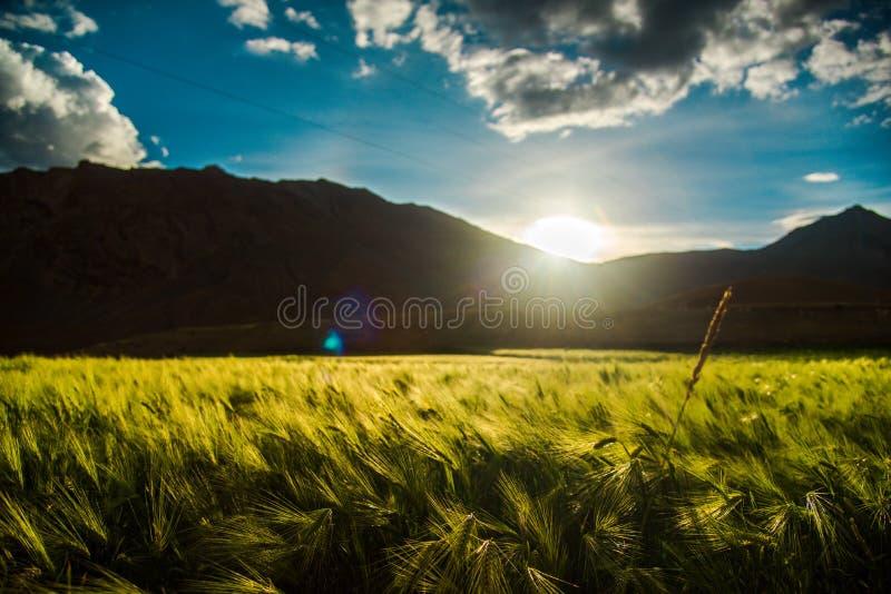 Обрабатывать землю гороха большой возвышенности стоковые фотографии rf
