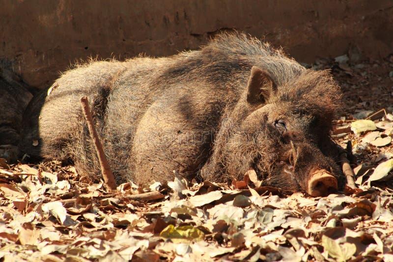 Обожатель отдыхая или спать в саде стоковые фотографии rf