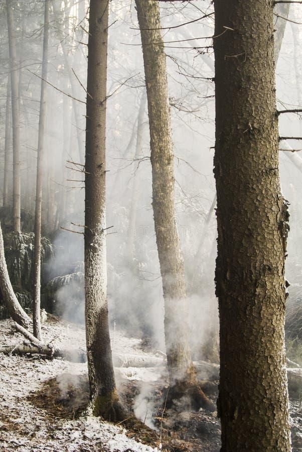 Ожога леса в зиме Огонь в лесе зажигание торфа в болоте горящая древесина Дым в лесе Dangerou стоковые изображения rf