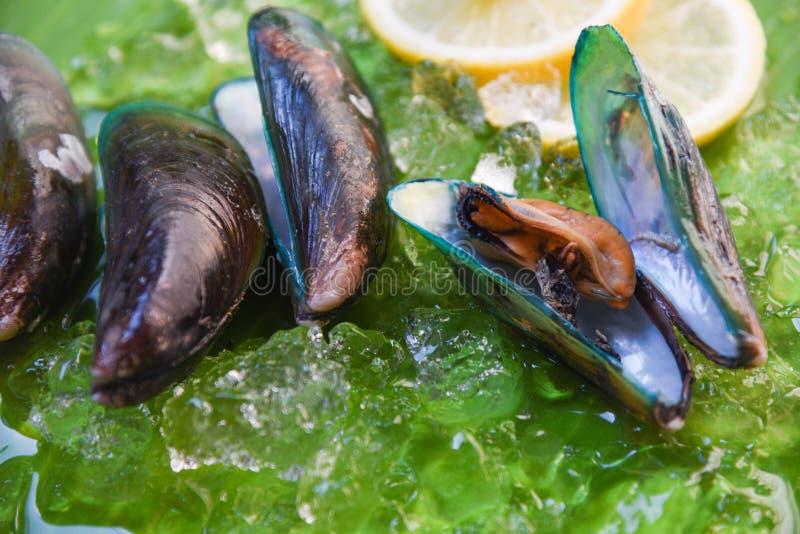 Океана мидии морепродуктов моллюска обедающий зеленого свежего изысканный с лимоном и льдом стоковое изображение