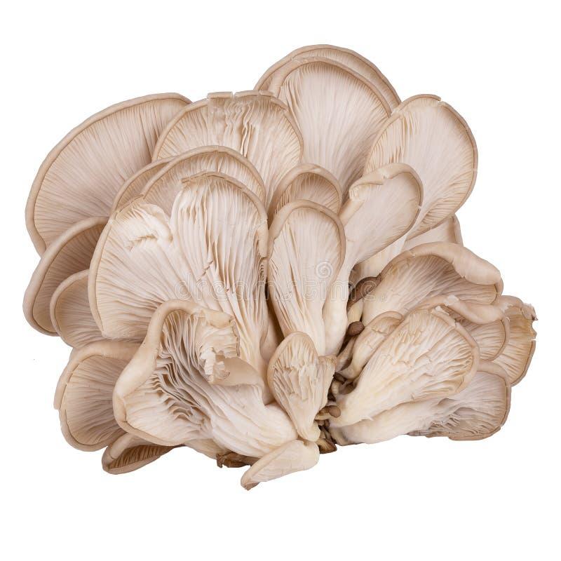 Один свежий гриб изолированный на белой предпосылке стоковые изображения