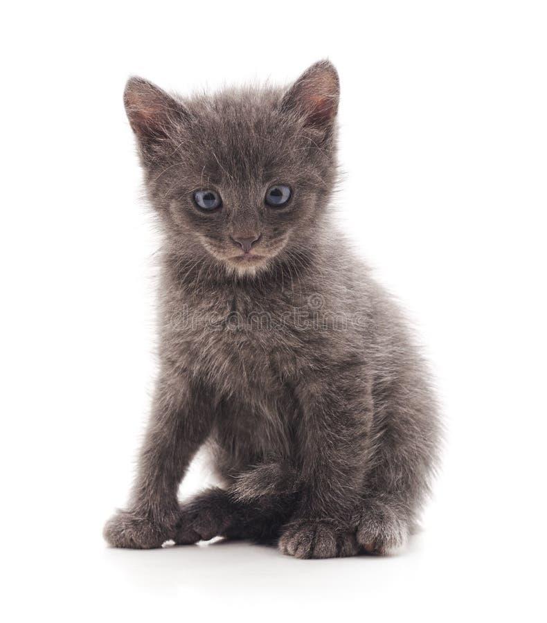 Один серый котенок стоковая фотография rf