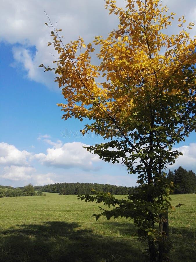Одно красивое дерево на осени стоковое фото rf