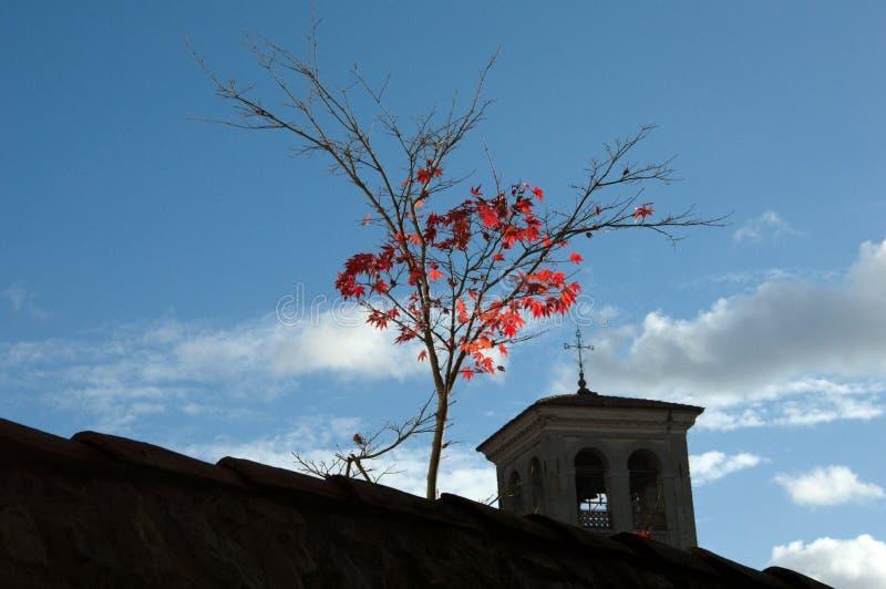 Осветите красные листья контржурным светом на стене стоковое фото