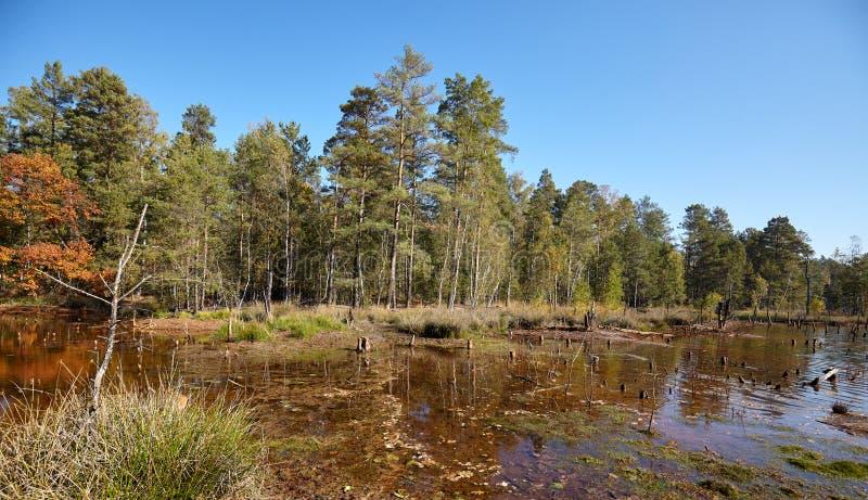 Осенний ландшафт с озером засыхания в лесе стоковое изображение rf