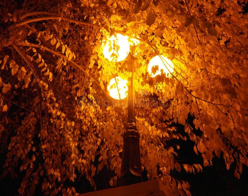 Осенний свет. Autumn light royalty free stock photo
