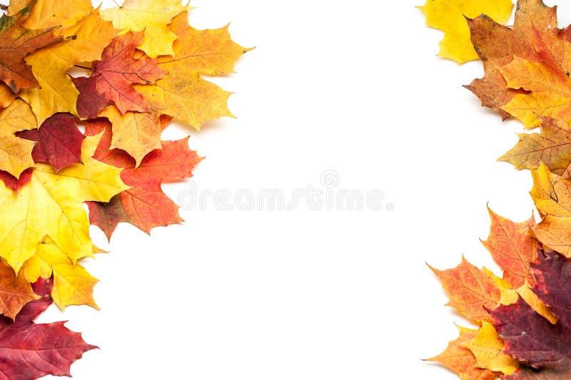 осень яблока миражирует листья состава сухие sacking ваза Рамка сделанная из листьев осени на белой предпосылке стоковые фотографии rf