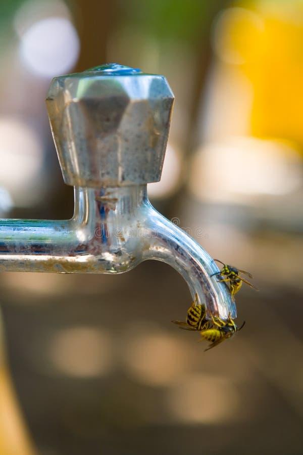3 оси выпивают воду от водопроводного крана стоковая фотография