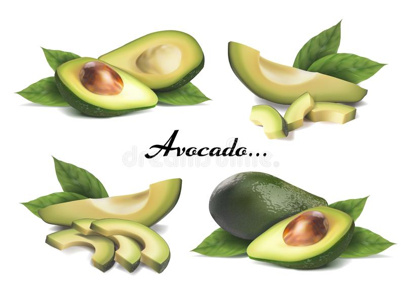 Whole avocado, sliced with leaves. Vector realistic set on a white background royalty free illustration