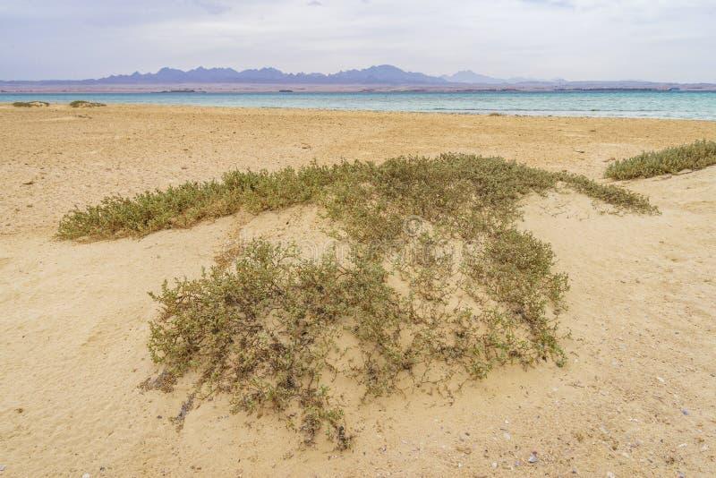 Островок рая, Египет стоковое фото