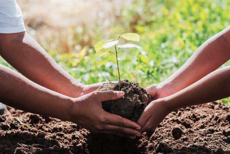 отец и дети помогая засаживающ небольшое дерево стоковая фотография