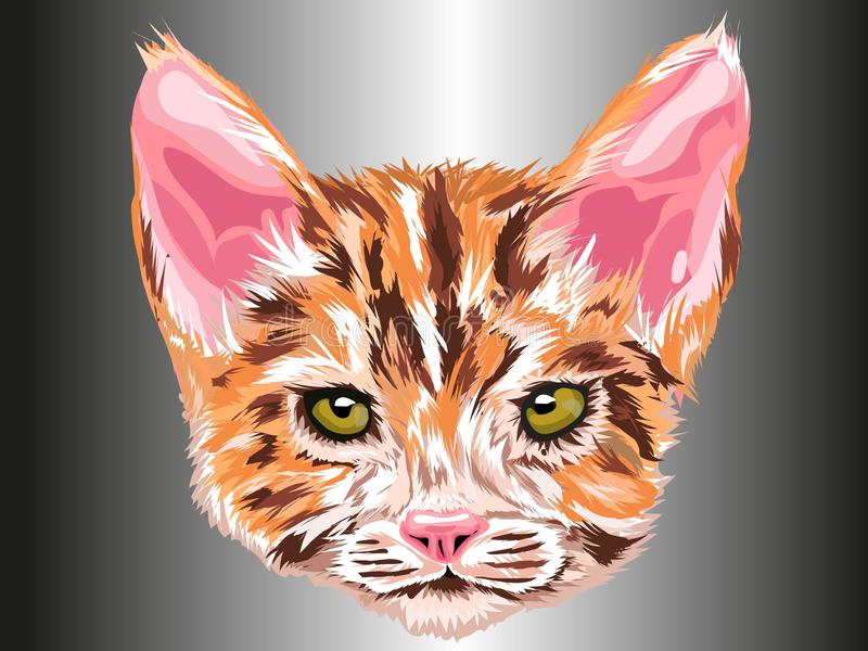 Отступление кота смотря вперед с зелеными глазами в апельсине, белый и коричневый с серым типом художественным чертежом предпосыл бесплатная иллюстрация