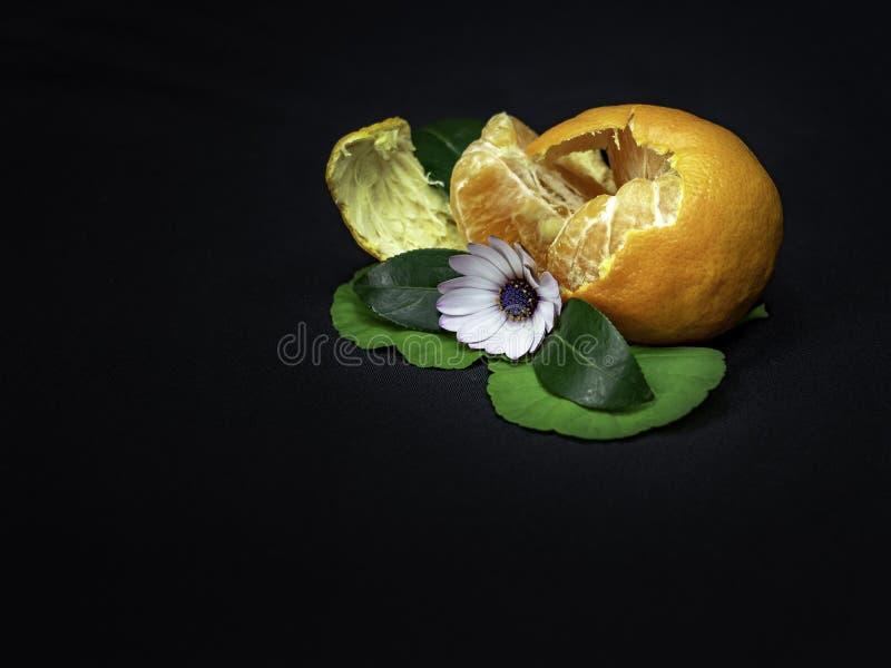 Отчасти слезл оранжевое с украшением маргаритки с листьями на черной предпосылке стоковое фото